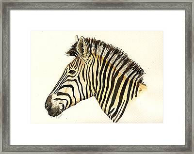 Zebra Head Study Framed Print by Juan  Bosco