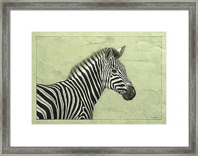 Zebra Framed Print by James W Johnson
