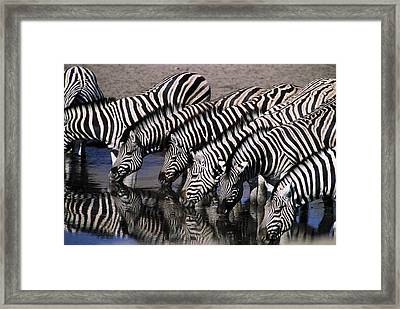 Zebra Line Framed Print by Stefan Carpenter