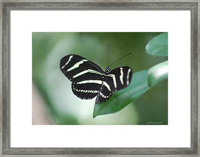 Zebra Longwing Butterfly A Quite Moment Framed Print