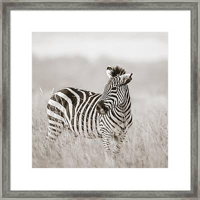 Zebra Masai Mara Kenya Framed Print by Regina Mueller