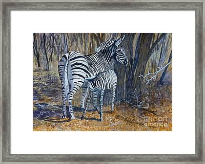 Zebra Mother And Foal Framed Print by Caroline Street