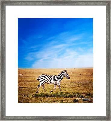 Zebra On African Savanna. Framed Print by Michal Bednarek