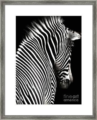 Zebra On Black Framed Print