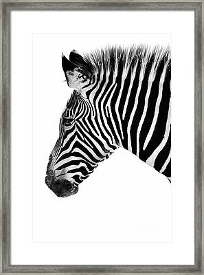 Zebra Profile Black And White Framed Print