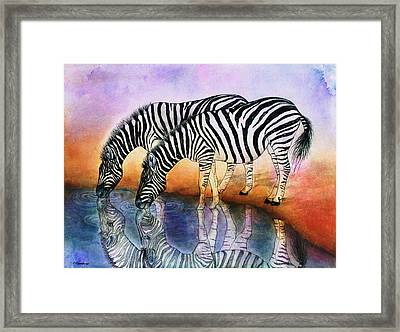 Zebra Reflections Framed Print