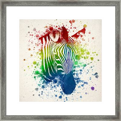 Zebra Splash Framed Print by Aged Pixel