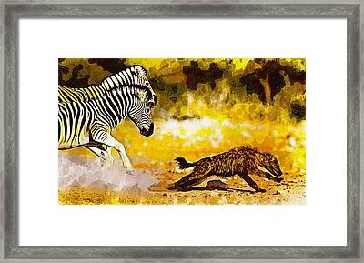 Zebra Stallion Chasing Young Hyena Framed Print