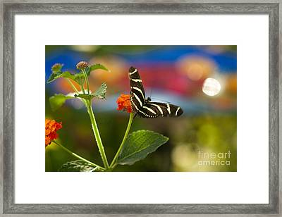 Zebra Striped Butterflies Framed Print by Cari Gesch