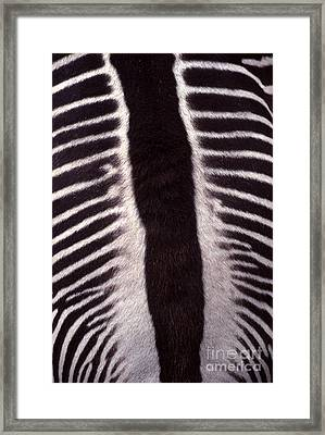 Zebra Stripes Closeup Framed Print by Anna Lisa Yoder
