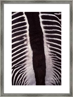 Zebra Stripes Closeup Framed Print