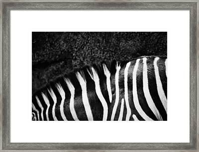 Zebra Stripes Framed Print by Joan Herwig