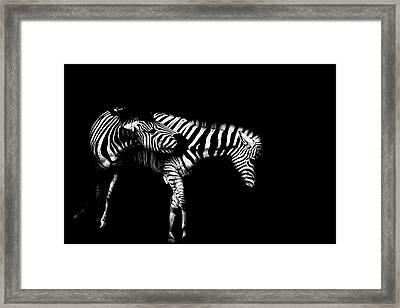 Zebra Stripes Framed Print by Martin Newman