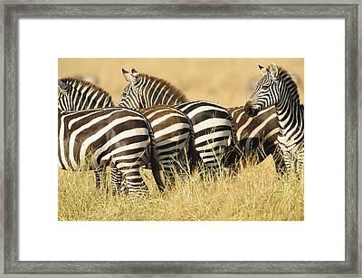 Framed Print featuring the photograph Zebra Stripes by Phyllis Peterson