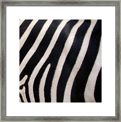 Framed Print featuring the photograph Zebra Stripes by Ramona Johnston