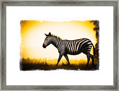 Framed Print featuring the photograph Zebra Sunset by Mike Gaudaur