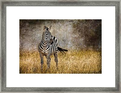 Zebra Tail Flick Framed Print by Mike Gaudaur