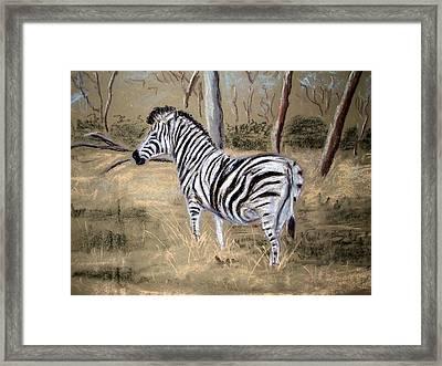 Zebra Framed Print by Tony Gunning