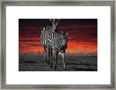 Zebra Train - Featured In Nature Photography - Wildlife And A Place For All Groups Framed Print by EricaMaxine  Price