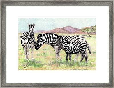 Zebra Trio Framed Print