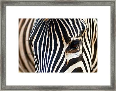 Framed Print featuring the photograph Zebra Vibrations by Charles Lupica
