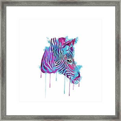 Zebra Watercolor Framed Print by Becca Buecher