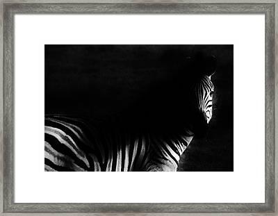 Zebra Framed Print by Werner Lehmann