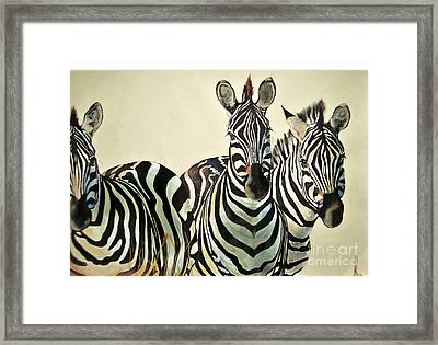 Framed Print featuring the drawing Zebras Drawing by Maja Sokolowska
