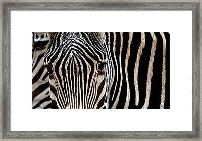 Framed Print featuring the photograph Zebras Face To Face by Nadalyn Larsen
