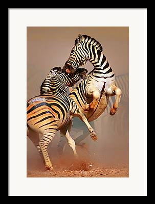 Burchell Framed Prints