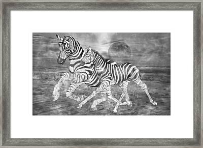 Zebras I Of II Framed Print