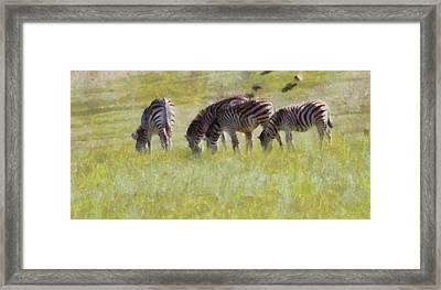 Zebras In Africa Framed Print by Dan Sproul