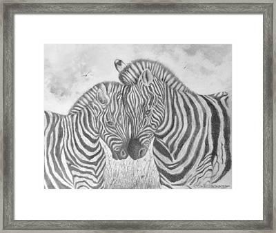 Zebras Framed Print by Jim Hubbard