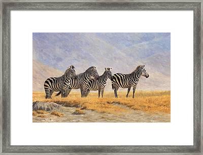 Zebras Ngorongoro Crater Framed Print by David Stribbling
