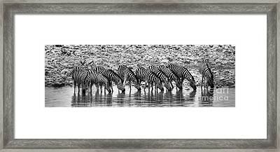 Framed Print featuring the photograph Zebras On A Waterhole by Juergen Klust