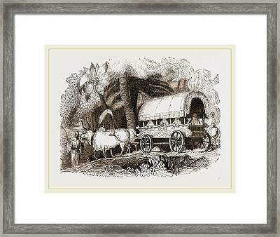 Zebus And Turkish Arabah Framed Print by Litz Collection