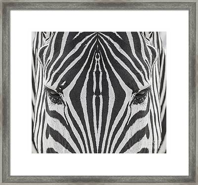 Zeebra Skin Framed Print