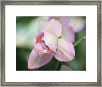 Zen Framed Print by Liudmila Di