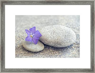 Zen Periwinkle Framed Print by Delphimages Photo Creations