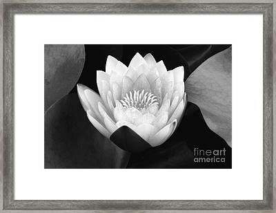 Framed Print featuring the photograph Waterlily Rising  by John F Tsumas