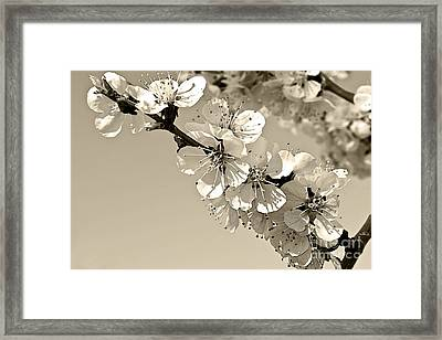 Framed Print featuring the photograph Zen by Sandi Mikuse
