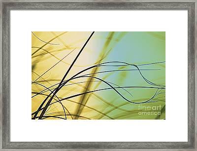 Zen - To Be Framed Print