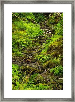 Zen Framed Print by Yuri Fineart