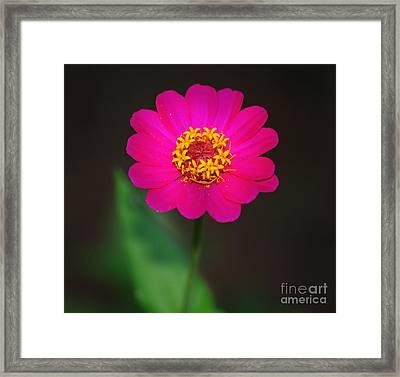 Zenia Framed Print