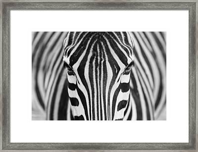 Zepra Framed Print