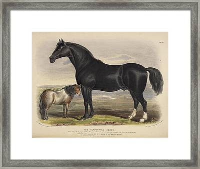 Zetland Breed Framed Print by British Library