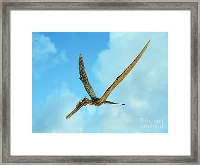 Zhenyuanopterus, A Genus Of Pterosaur Framed Print