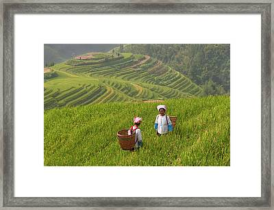 Zhuang Minority Women Walk Through Rice Framed Print