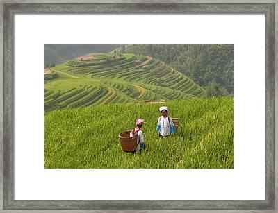 Zhuang Minority Women Walk Through Rice Framed Print