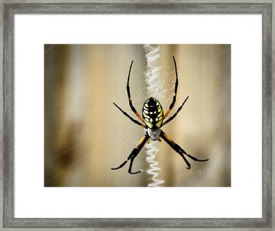 Zig Zag Is More Fun Framed Print